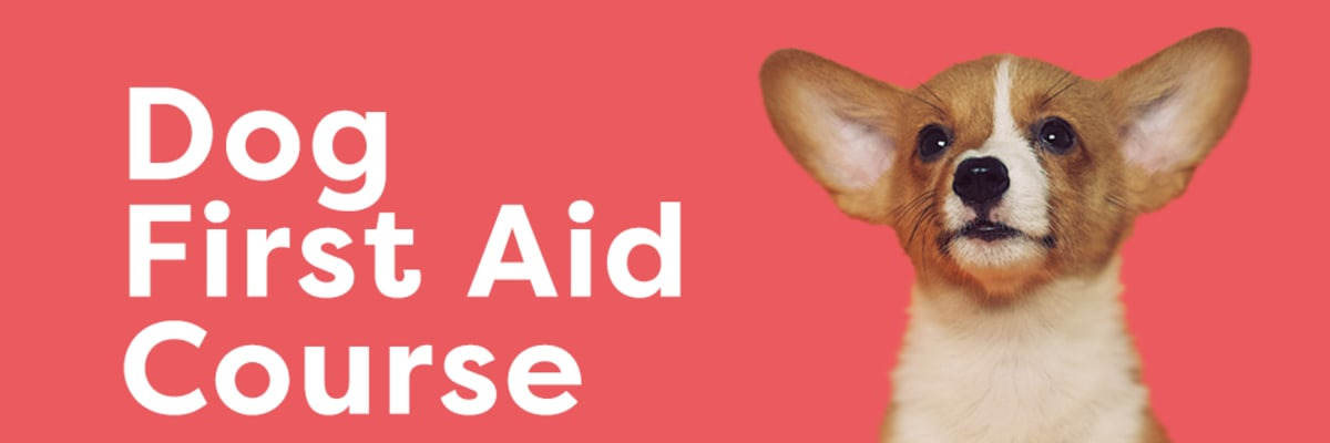 Dog First Aid Course Banner